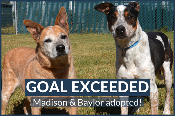 Baylor and Madison Adopted