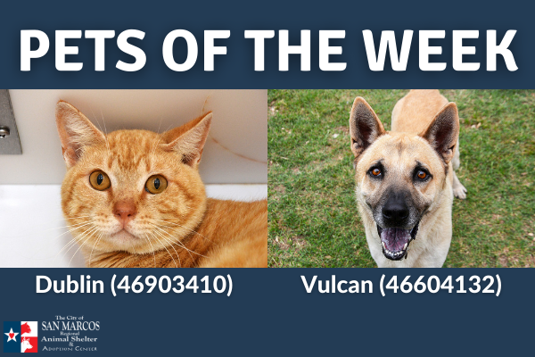 San Marcos Regional Animal Shelter Pets of the Week